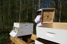 Looking into the first hive