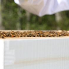 Box o'Bees