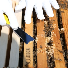 Cleaning off some of the burr comb from on top of the frames
